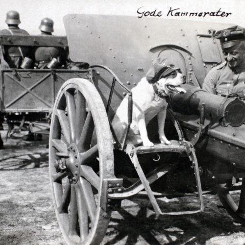 Kammerat hund